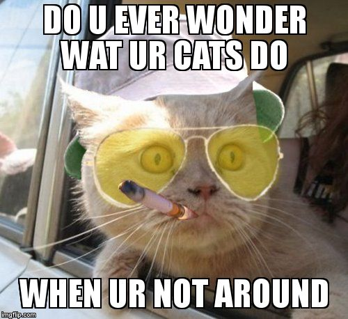 Fear And Loathing Cat | DO U EVER WONDER WAT UR CATS DO  WHEN UR NOT AROUND | image tagged in memes,fear and loathing cat | made w/ Imgflip meme maker