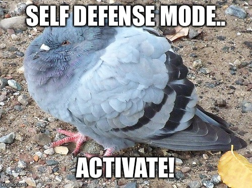 1aslhg image tagged in funny,memes,bird,puffy,self defense mode imgflip