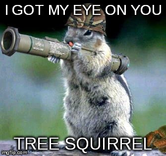 bazooka squirrel | I GOT MY EYE ON YOU TREE SQUIRREL | image tagged in bazooka squirrel | made w/ Imgflip meme maker