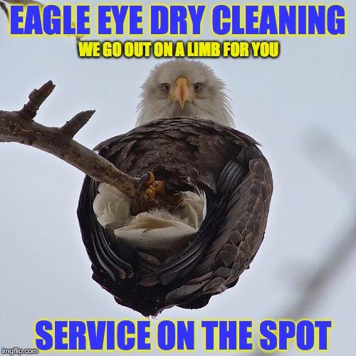 1atm0y bald eagle imgflip