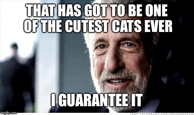 THAT HAS GOT TO BE ONE OF THE CUTEST CATS EVER I GUARANTEE IT | made w/ Imgflip meme maker