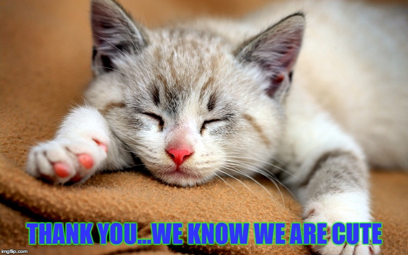 THANK YOU...WE KNOW WE ARE CUTE | made w/ Imgflip meme maker