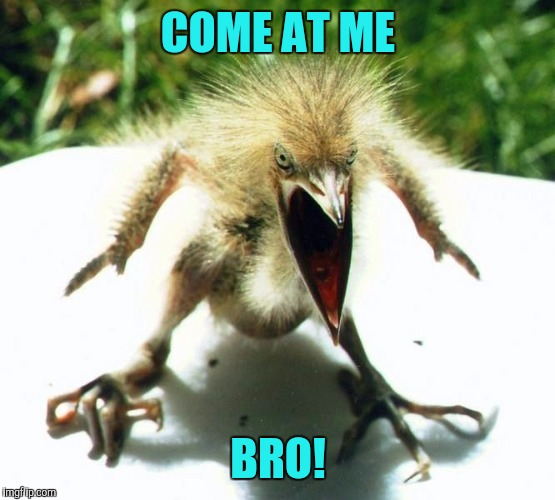 Unpleasant Bird | COME AT ME BRO! | image tagged in unpleasant bird | made w/ Imgflip meme maker