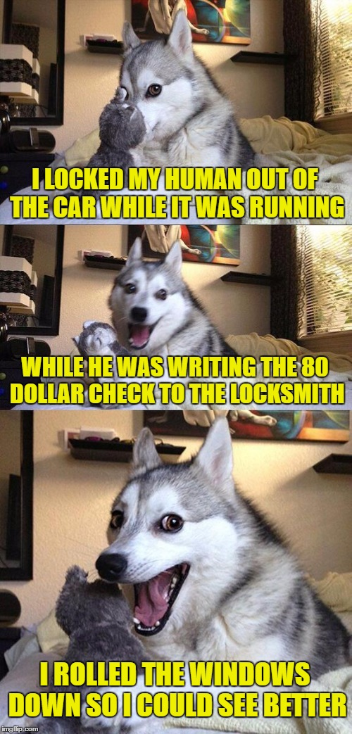 Locked out | I LOCKED MY HUMAN OUT OF THE CAR WHILE IT WAS RUNNING WHILE HE WAS WRITING THE 80 DOLLAR CHECK TO THE LOCKSMITH I ROLLED THE WINDOWS DOWN SO | image tagged in bad pun dog,locked out,call the locksmith,good dog,funny dogs,bad dog | made w/ Imgflip meme maker