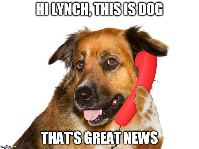Dog On The Phone | HI LYNCH, THIS IS DOG THAT'S GREAT NEWS | image tagged in dog on the phone | made w/ Imgflip meme maker