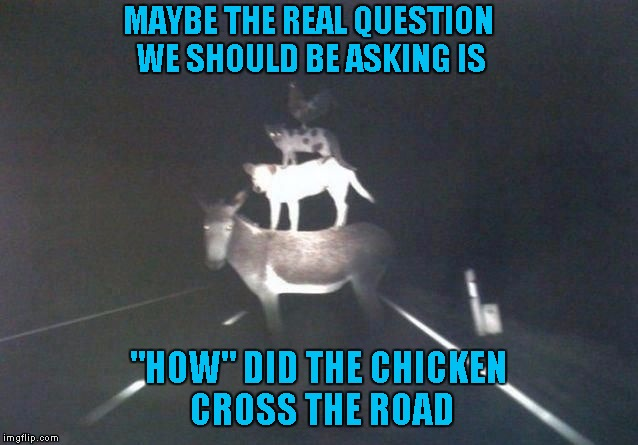 "Maybe we've been asking the wrong questions... | MAYBE THE REAL QUESTION WE SHOULD BE ASKING IS ""HOW"" DID THE CHICKEN CROSS THE ROAD 