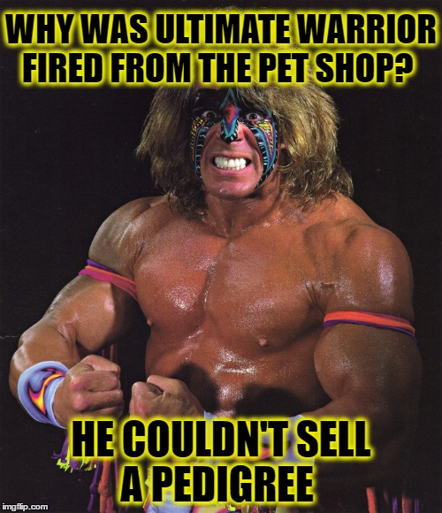 WWE Talent | WHY WAS ULTIMATE WARRIOR FIRED FROM THE PET SHOP? HE COULDN'T SELL A PEDIGREE | image tagged in ultimate warrior,wwe did you know,wwe,pro wrestling,wrestlemania,pedigree | made w/ Imgflip meme maker
