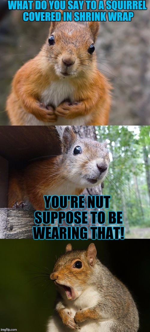 WHAT DO YOU SAY TO A SQUIRREL COVERED IN SHRINK WRAP YOU'RE NUT SUPPOSE TO BE WEARING THAT! | made w/ Imgflip meme maker