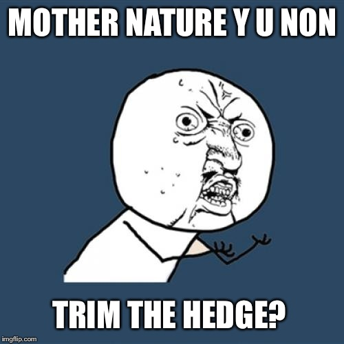 Y U No Meme | MOTHER NATURE Y U NON TRIM THE HEDGE? | image tagged in memes,y u no | made w/ Imgflip meme maker
