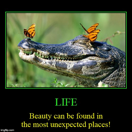 Sometimes you can find beauty where you would never think to look! | LIFE | Beauty can be found in the most unexpected places! | image tagged in funny,demotivationals,life,beauty,unexpected places,nature | made w/ Imgflip demotivational maker