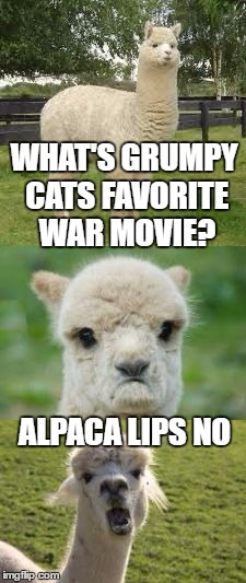 Bad pun Alpaca