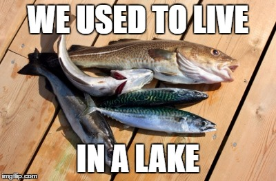 fish | WE USED TO LIVE IN A LAKE | image tagged in fish | made w/ Imgflip meme maker