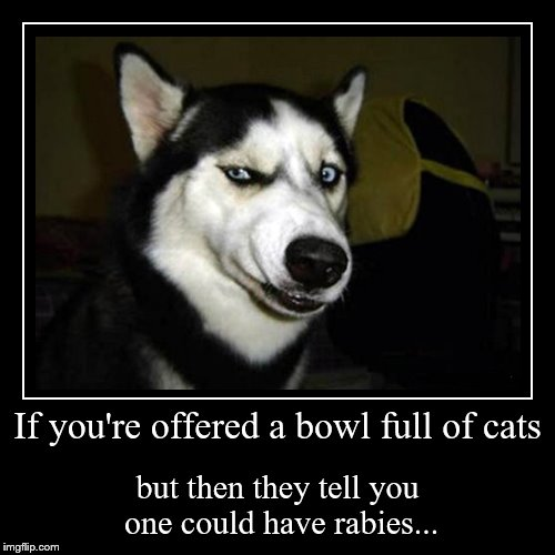 For those that don't understand the Skittles analogy. | If you're offered a bowl full of cats | but then they tell you one could have rabies... | image tagged in funny,demotivationals | made w/ Imgflip demotivational maker