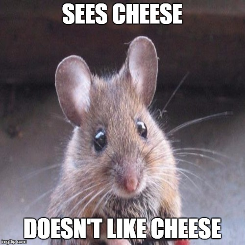 SEES CHEESE DOESN'T LIKE CHEESE | made w/ Imgflip meme maker