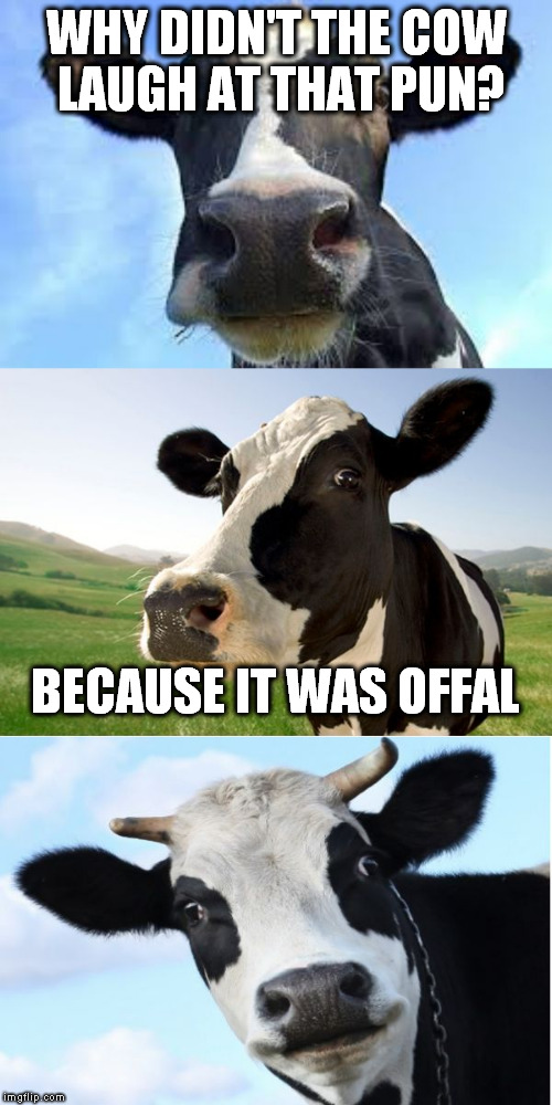 Bad Pun Cow | WHY DIDN'T THE COW LAUGH AT THAT PUN? BECAUSE IT WAS OFFAL | image tagged in bad pun cow | made w/ Imgflip meme maker