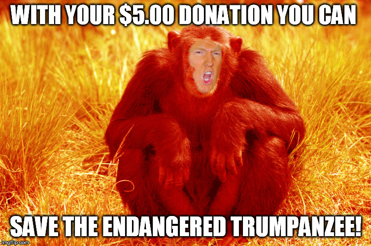 trumpanzee | WITH YOUR $5.00 DONATION YOU CAN SAVE THE ENDANGERED TRUMPANZEE! | image tagged in trump,donald trump,shitgibbon,trumpanzee | made w/ Imgflip meme maker