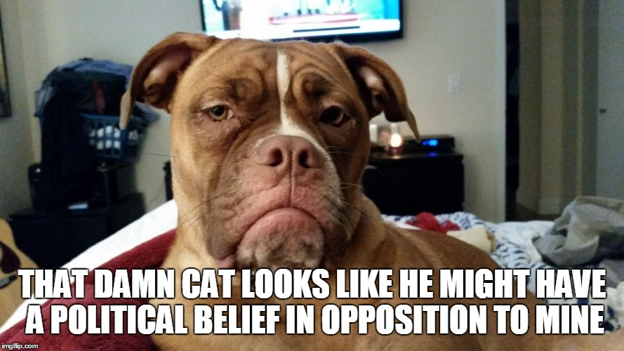 THAT DAMN CAT LOOKS LIKE HE MIGHT HAVE A POLITICAL BELIEF IN OPPOSITION TO MINE | made w/ Imgflip meme maker