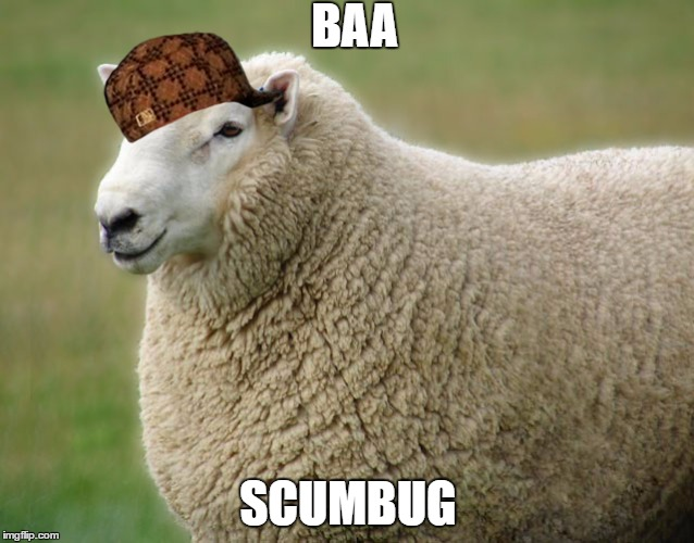 sheepy |  BAA; SCUMBUG | image tagged in sheep,a,b,c,d,e | made w/ Imgflip meme maker