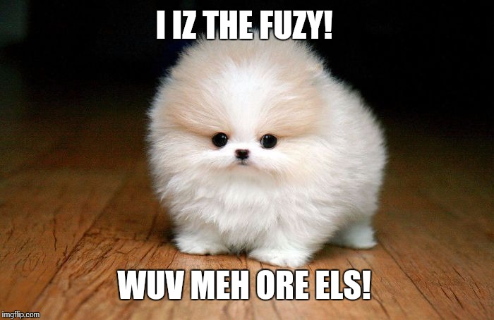 Derp Doge |  I IZ THE FUZY! WUV MEH ORE ELS! | image tagged in derp doge | made w/ Imgflip meme maker