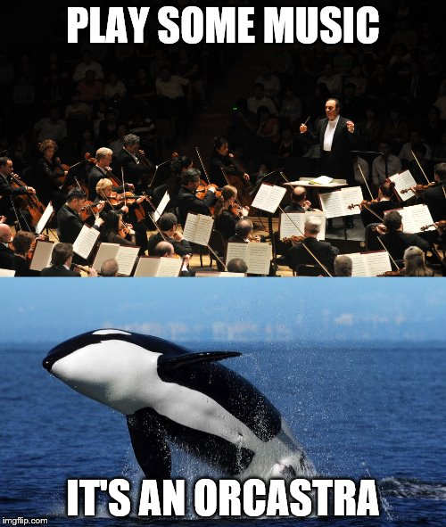 Orcasta Summons the Orcas | PLAY SOME MUSIC IT'S AN ORCASTRA | image tagged in orca,orchestra,music,memes,funny | made w/ Imgflip meme maker