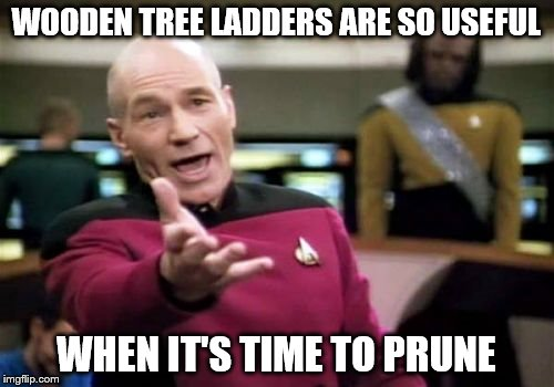 Picard Wtf Meme | WOODEN TREE LADDERS ARE SO USEFUL WHEN IT'S TIME TO PRUNE | image tagged in memes,picard wtf | made w/ Imgflip meme maker