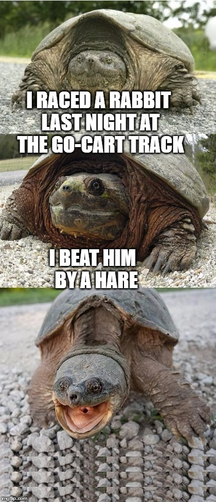 The tortoise and the bunny | I RACED A RABBIT LAST NIGHT AT THE GO-CART TRACK I BEAT HIM  BY A HARE | image tagged in bad pun tortoise,funny memes,tortoise,rabbit,bad pun | made w/ Imgflip meme maker