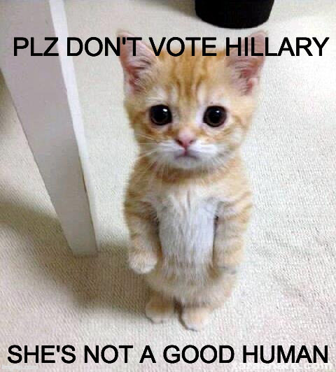 Cute Cat isn't endorsing, but knows who for sure who not to vote for. | PLZ DON'T VOTE HILLARY SHE'S NOT A GOOD HUMAN | image tagged in memes,cute cat,trump,hillary clinton,jill stein,gary johnson | made w/ Imgflip meme maker