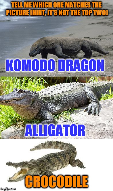 KOMODO DRAGON CROCODILE ALLIGATOR TELL ME WHICH ONE MATCHES THE PICTURE (HINT, IT'S NOT THE TOP TWO) | made w/ Imgflip meme maker