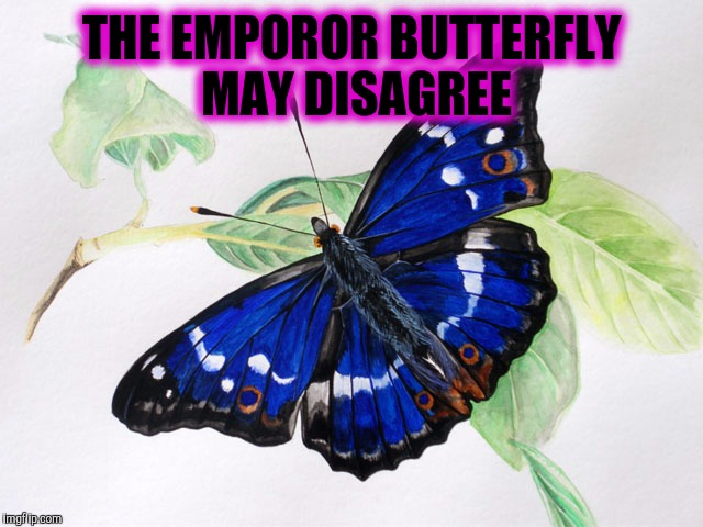 THE EMPOROR BUTTERFLY MAY DISAGREE | made w/ Imgflip meme maker