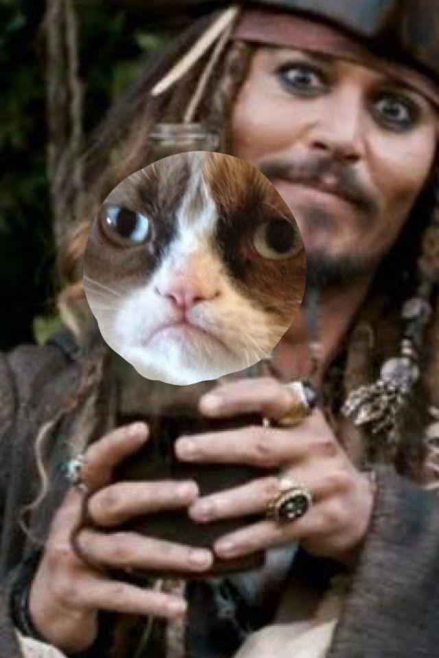 grumpy cat meme generator - 640×960