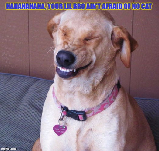 HAHAHAHAHA, YOUR LIL BRO AIN'T AFRAID OF NO CAT | made w/ Imgflip meme maker