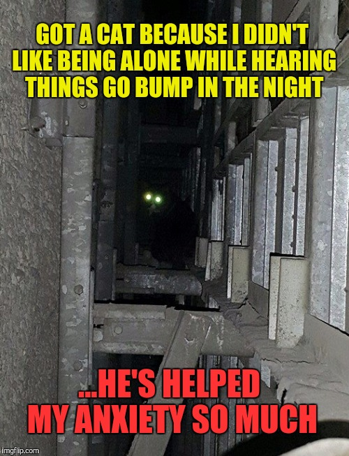 Just me and my cat, Satan | GOT A CAT BECAUSE I DIDN'T LIKE BEING ALONE WHILE HEARING THINGS GO BUMP IN THE NIGHT ...HE'S HELPED MY ANXIETY SO MUCH | image tagged in memes,cats,scary,home alone | made w/ Imgflip meme maker
