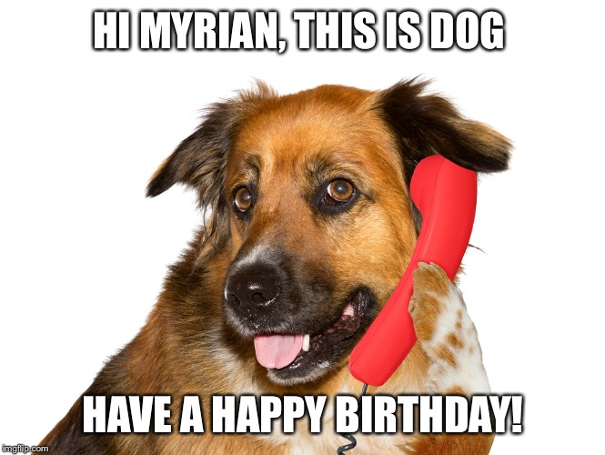 Dog On The Phone | HI MYRIAN, THIS IS DOG HAVE A HAPPY BIRTHDAY! | image tagged in dog on the phone | made w/ Imgflip meme maker
