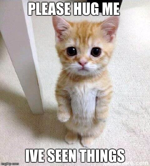 I Have Seen Things | PLEASE HUG ME IVE SEEN THINGS | image tagged in memes,cute cat | made w/ Imgflip meme maker