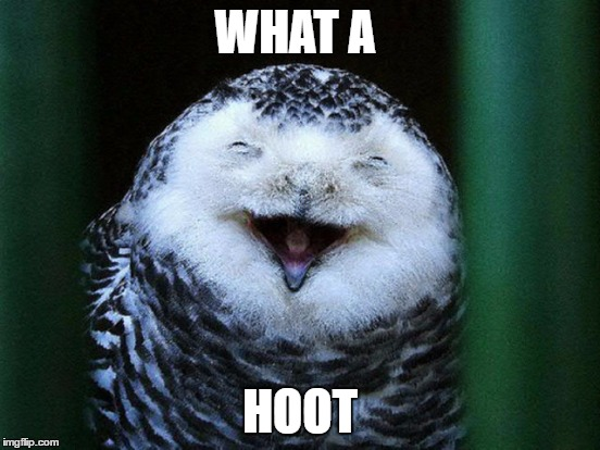 WHAT A HOOT | made w/ Imgflip meme maker