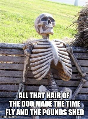 Waiting Skeleton Meme | ALL THAT HAIR OF THE DOG MADE THE TIME FLY AND THE POUNDS SHED | image tagged in memes,waiting skeleton | made w/ Imgflip meme maker