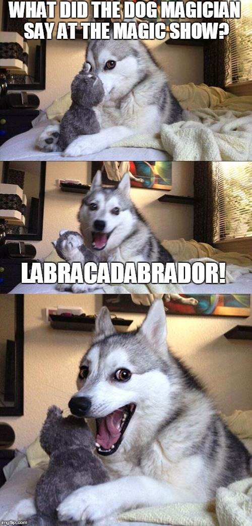 It's so magical! | WHAT DID THE DOG MAGICIAN SAY AT THE MAGIC SHOW? LABRACADABRADOR! | image tagged in memes,bad pun dog,magic,magician,funny | made w/ Imgflip meme maker
