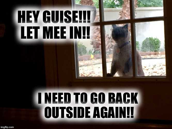 My cat acts just like a dog | HEY GUISE!!! LET MEE IN!! I NEED TO GO BACK OUTSIDE AGAIN!! | image tagged in cats,siamese cat,dogs an cats,kitty,kitty cat,cat meme | made w/ Imgflip meme maker