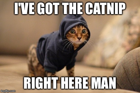 Hoody Cat | I'VE GOT THE CATNIP RIGHT HERE MAN | image tagged in memes,hoody cat | made w/ Imgflip meme maker