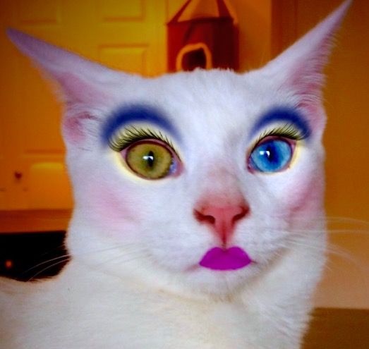 High Meme Cat