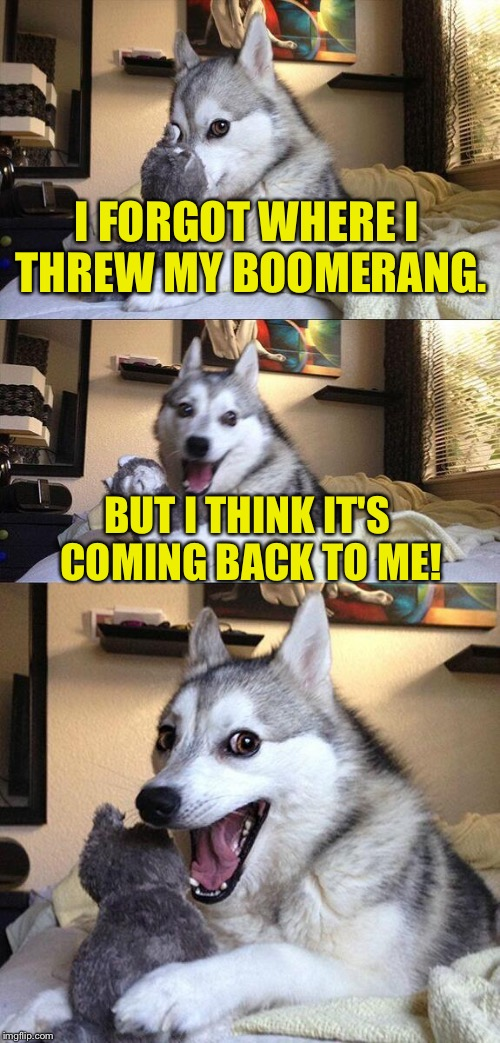 Bad Pun Dog Meme | I FORGOT WHERE I THREW MY BOOMERANG. BUT I THINK IT'S COMING BACK TO ME! | image tagged in memes,bad pun dog,boomerang,funny memes | made w/ Imgflip meme maker