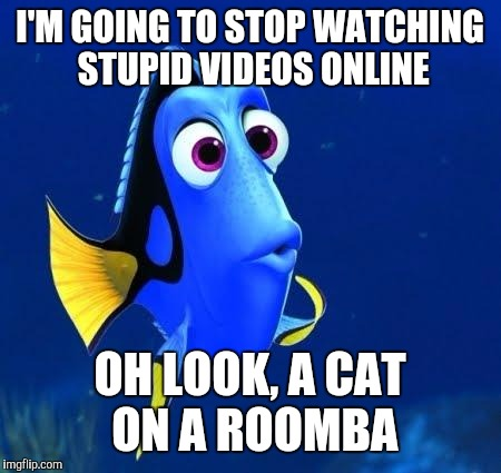 dory | I'M GOING TO STOP WATCHING STUPID VIDEOS ONLINE OH LOOK, A CAT ON A ROOMBA | image tagged in dory | made w/ Imgflip meme maker