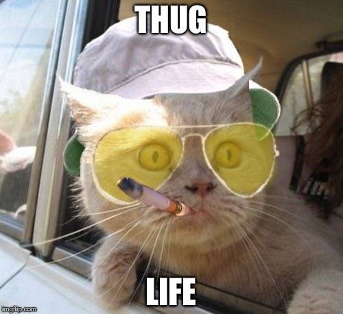 Fear And Loathing Cat | THUG LIFE | image tagged in memes,fear and loathing cat | made w/ Imgflip meme maker
