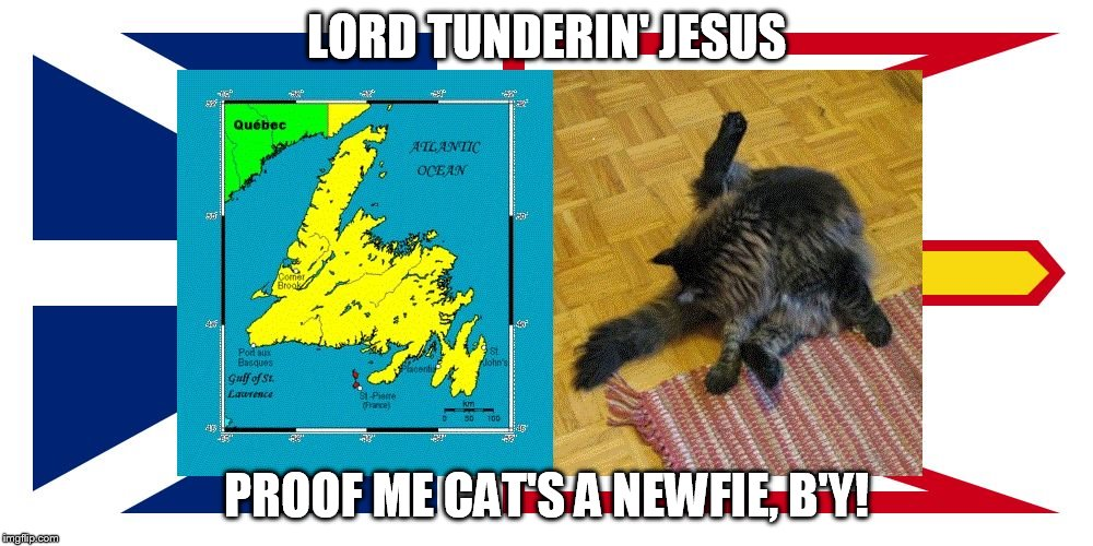 LORD TUNDERIN' JESUS PROOF ME CAT'S A NEWFIE, B'Y! | image tagged in newfoundland,newfie,cat,humor | made w/ Imgflip meme maker
