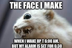 At this point, if I fall back asleep, I sleep through my alarm | THE FACE I MAKE WHEN I WAKE UP T 6:00 AM, BUT MY ALARM IS SET FOR 6:30 | image tagged in angry face,work week,ferrets,not funny,sleep deprivation creations | made w/ Imgflip meme maker