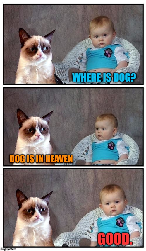 Grumpy Baby | WHERE IS DOG? DOG IS IN HEAVEN GOOD. | image tagged in dad joke cat,memes | made w/ Imgflip meme maker