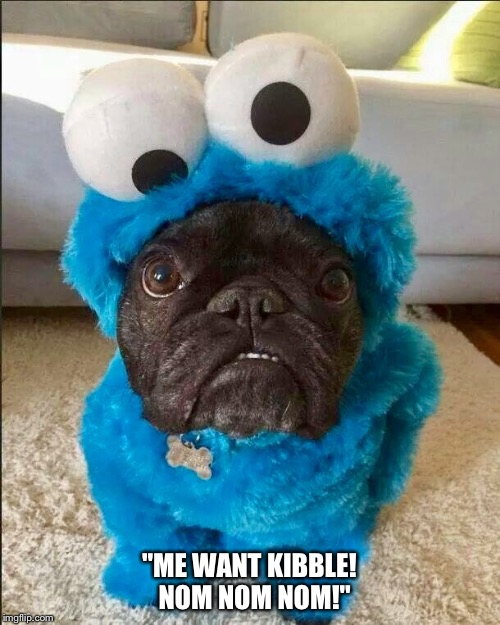 "Sesame Street's new muppet. |  ""ME WANT KIBBLE!  NOM NOM NOM!"" 