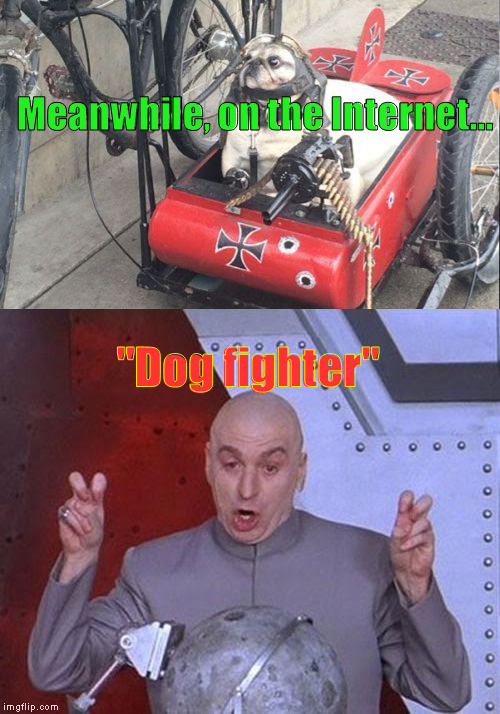 "Saw This Today: HAD To Meme It... | ""Dog fighter"" Meanwhile, on the Internet... 
