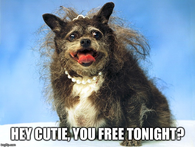 Ugly Dog | HEY CUTIE, YOU FREE TONIGHT? | image tagged in ugly dog | made w/ Imgflip meme maker