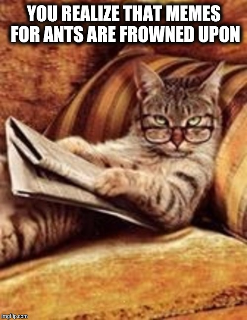how to read newspaper for cat